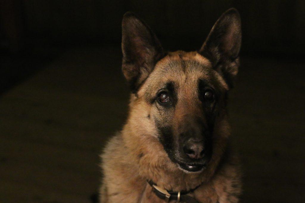 cuộc thi nhiếp ảnh dành cho chó 16