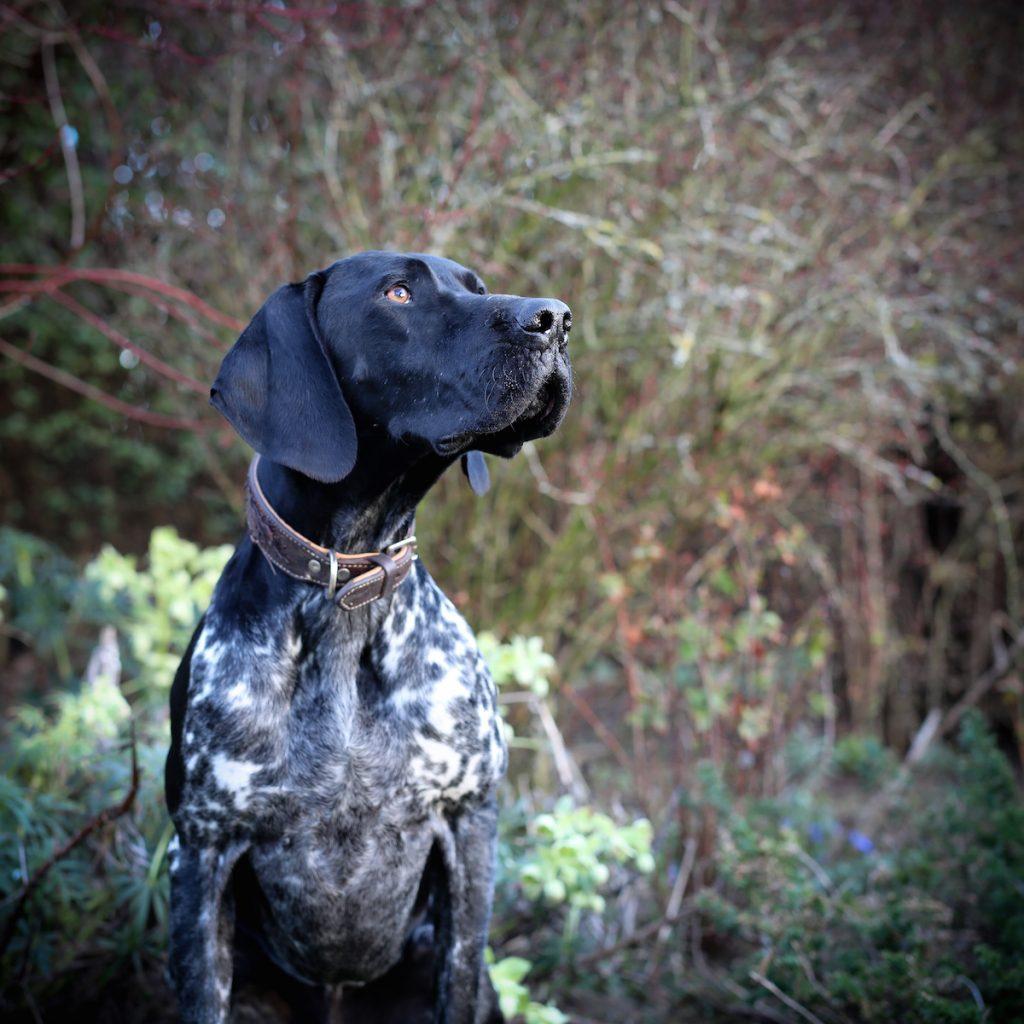 cuộc thi nhiếp ảnh dành cho chó 18