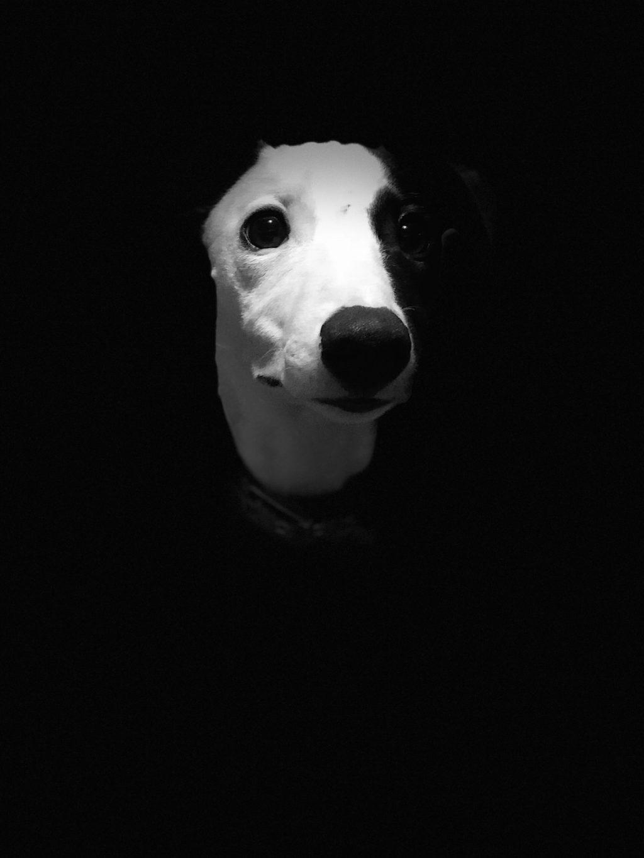 cuộc thi nhiếp ảnh dành cho chó 19