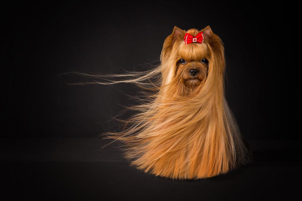 cuộc thi nhiếp ảnh dành cho chó 20