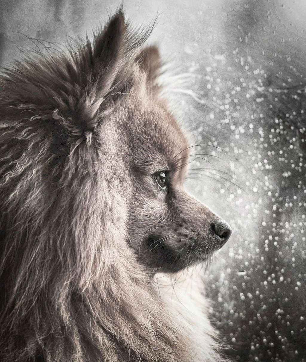 cuộc thi nhiếp ảnh dành cho chó 24