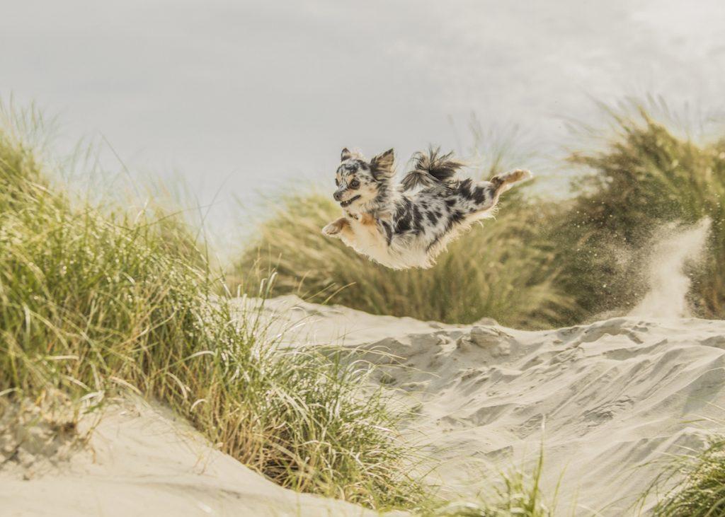 cuộc thi nhiếp ảnh dành cho chó 25