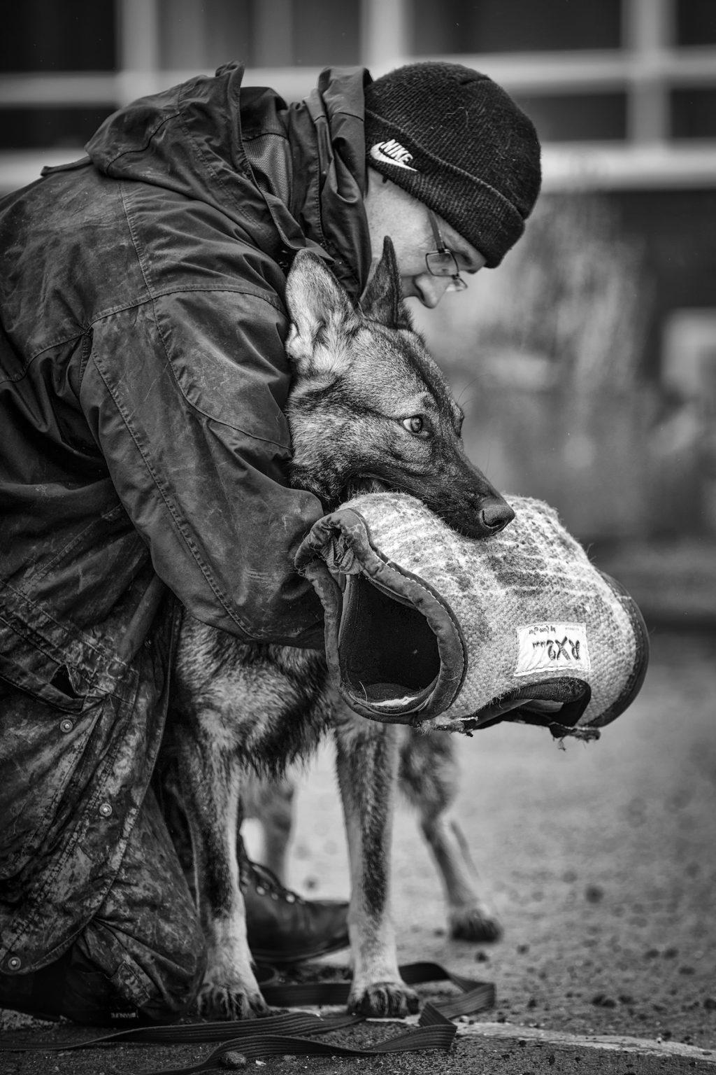 cuộc thi nhiếp ảnh dành cho chó 29