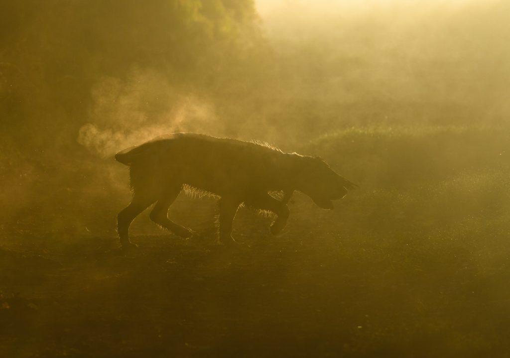 cuộc thi nhiếp ảnh dành cho chó 31
