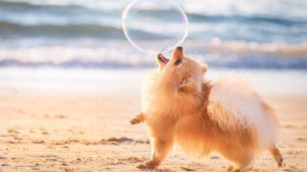 Những bức ảnh xuất sắc nhất trong cuộc thi nhiếp ảnh dành cho cún cưng năm 2018