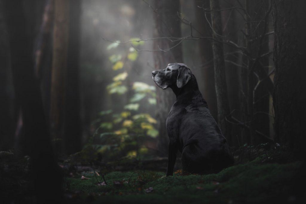 cuộc thi nhiếp ảnh dành cho chó 34