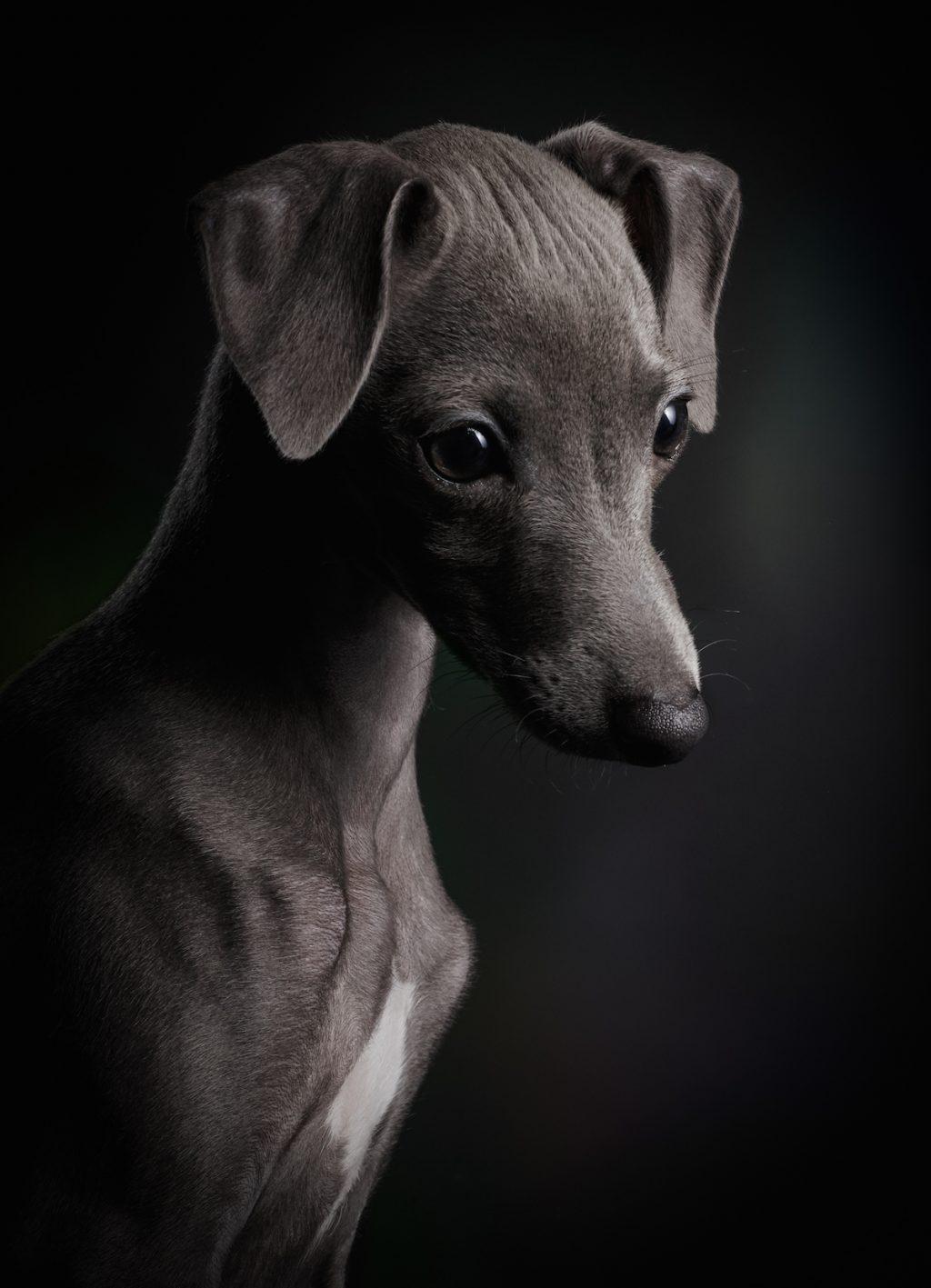 cuộc thi nhiếp ảnh dành cho chó 4