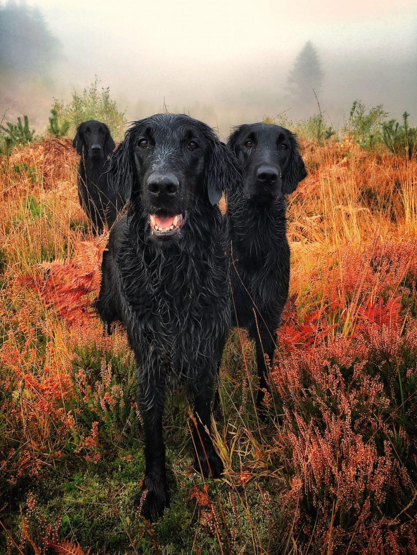 cuộc thi nhiếp ảnh dành cho chó 5