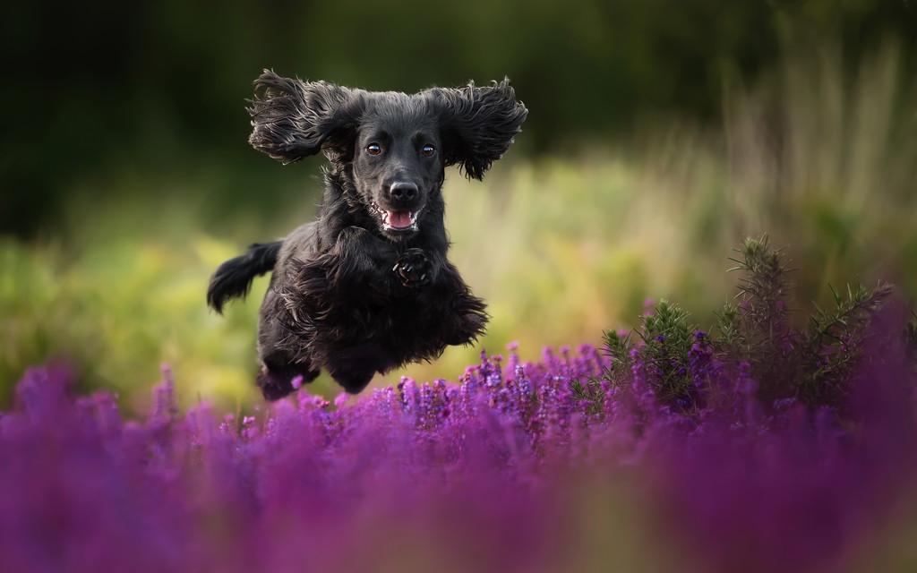 cuộc thi nhiếp ảnh dành cho chó 6