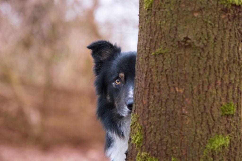 cuộc thi nhiếp ảnh dành cho chó 7