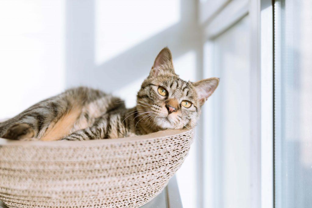 elle việt nam ngày quốc tế mèo 4