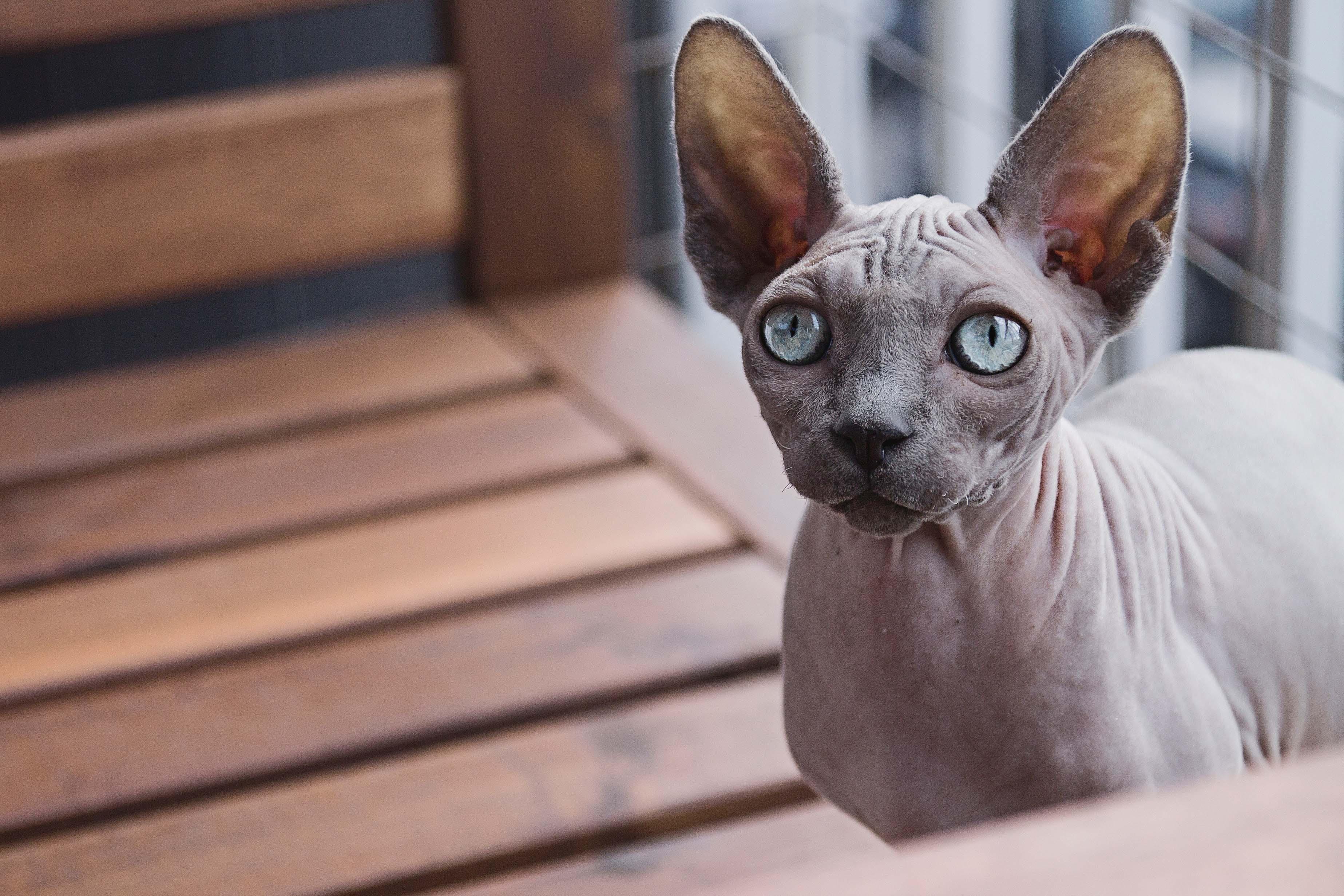 elle việt nam ngày quốc tế mèo 6