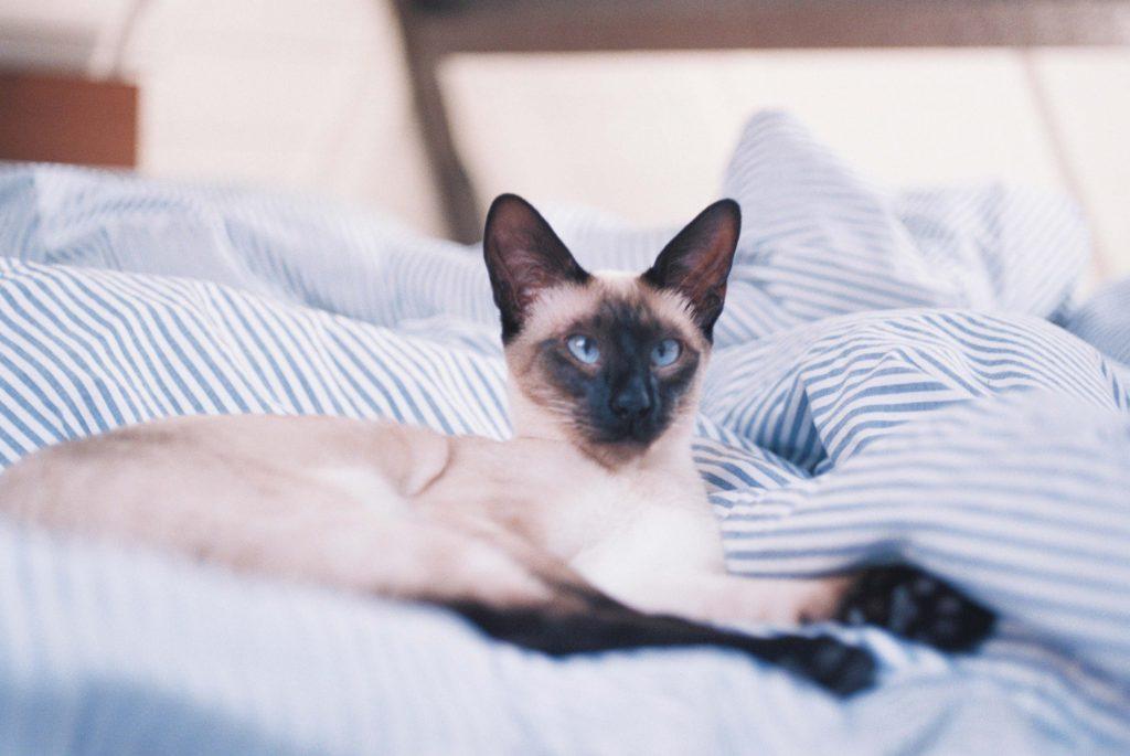 elle việt nam ngày quốc tế mèo 5