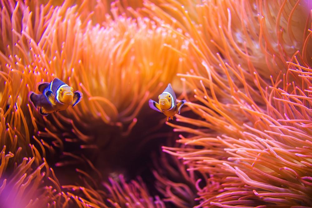 Living coral – màu cam san hô 6