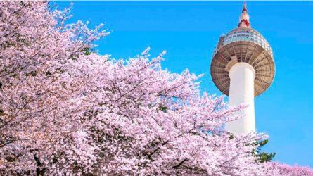 Du lịch Hàn Quốc: Lý do vì sao bạn nên đến Seoul ít nhất một lần trong đời
