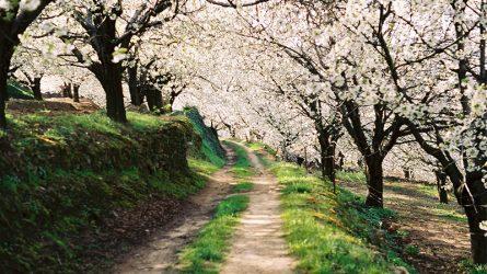Những địa điểm du lịch lý tưởng trong mùa Tết Nguyên đán