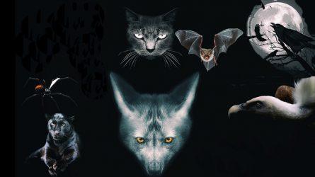 """[Trắc nghiệm] Con vật bạn chọn tiết lộ mặt """"phản diện"""" bên trong con người bạn"""