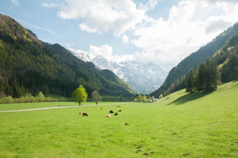 thảo nguyên xanh giữa thung lũng