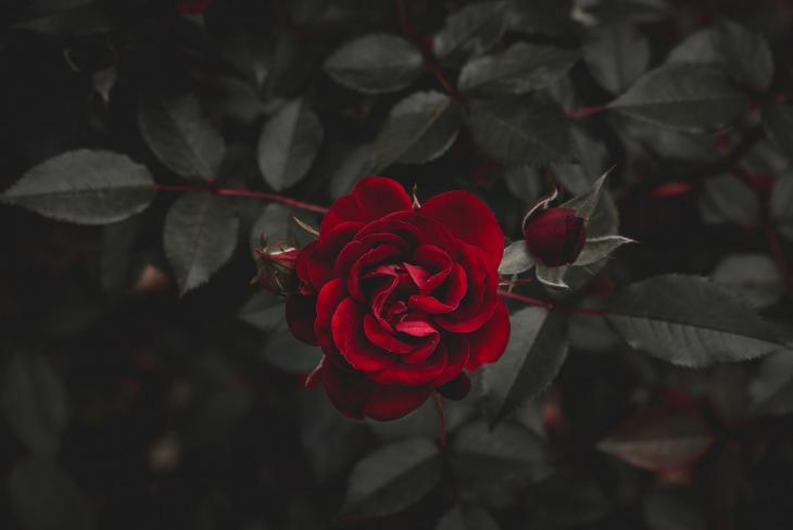 07 phụ nữ khi yêu nên lắng nghe lý trí hay thuận theo con tim
