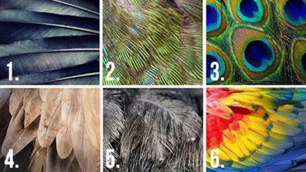 [Trắc nghiệm] Những chiếc lông vũ tiết lộ điều gì về tính cách của bạn?