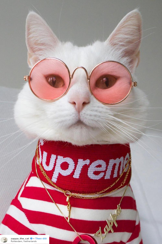 zappa mặc áo supreme và kính gọng tròn đỏ