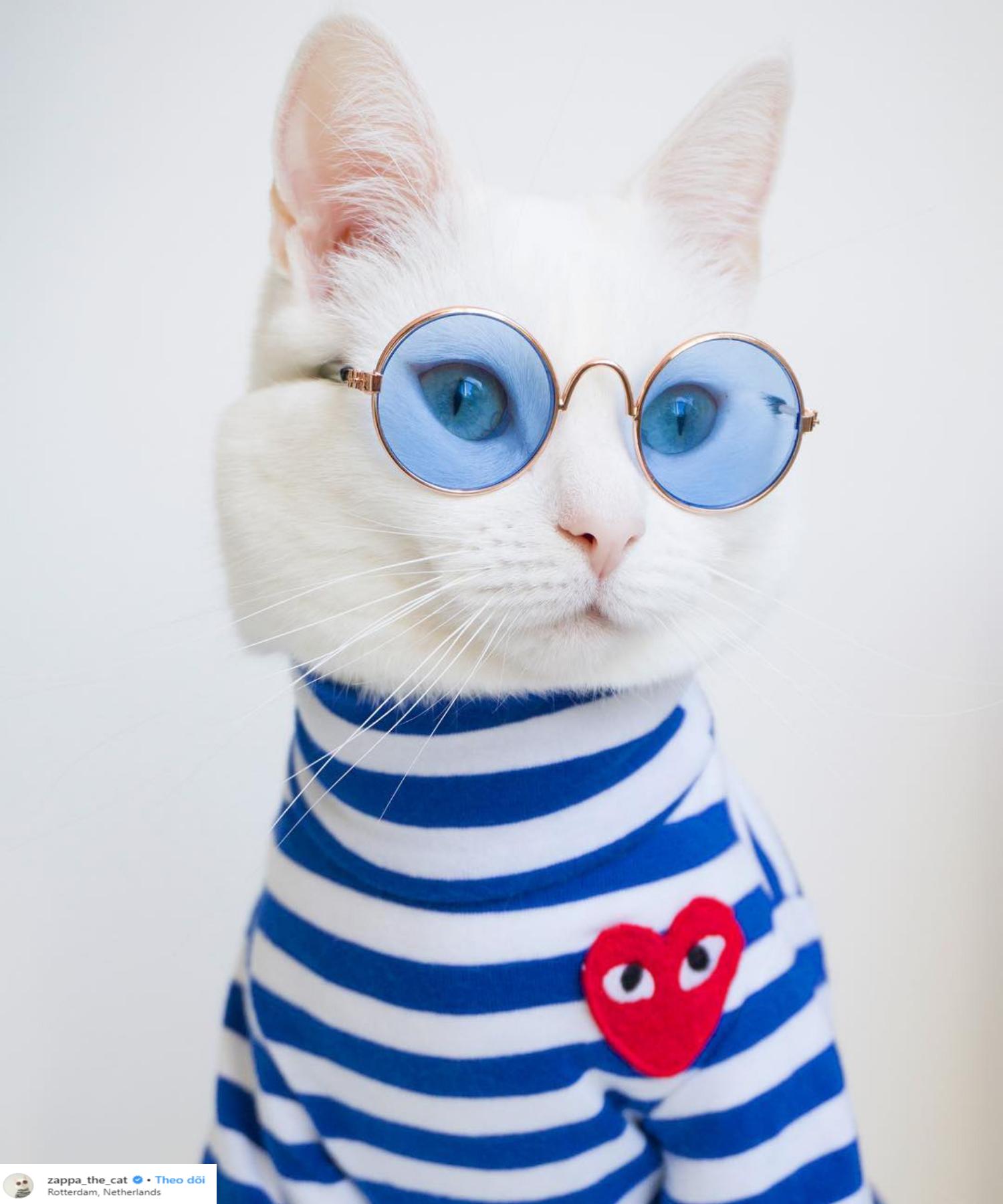 mèo zappa mặc áo kẻ ngang và mắt kính xanh