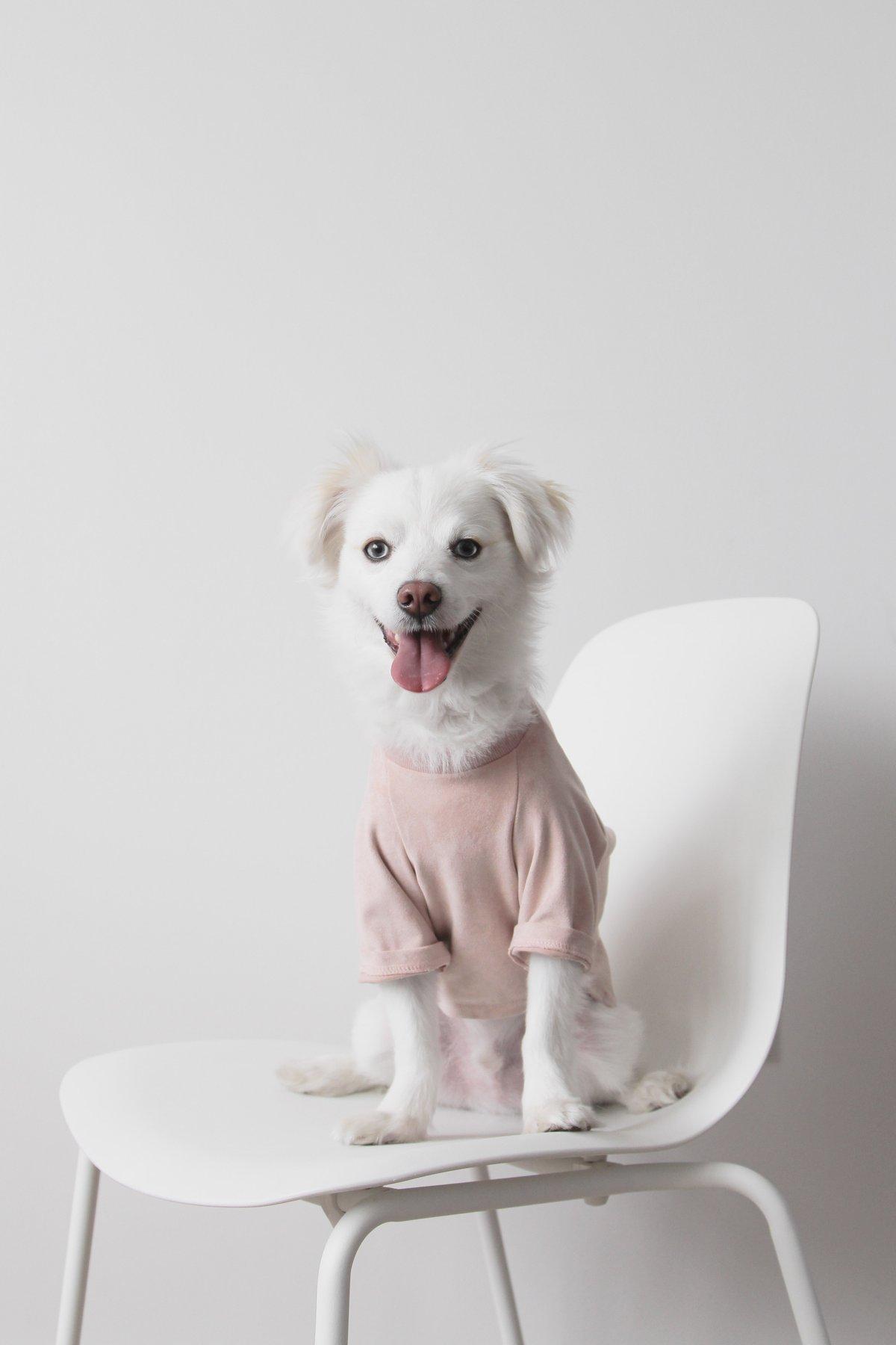 """thế hệ Millennials đang phát """"cuồng"""" vì những bộ trang phục đáng yêu dành cho chó 11"""