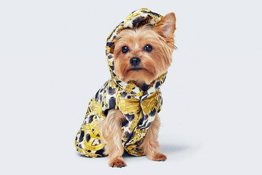 """thế hệ Millennials đang phát """"cuồng"""" vì những bộ trang phục đáng yêu dành cho chó 13"""