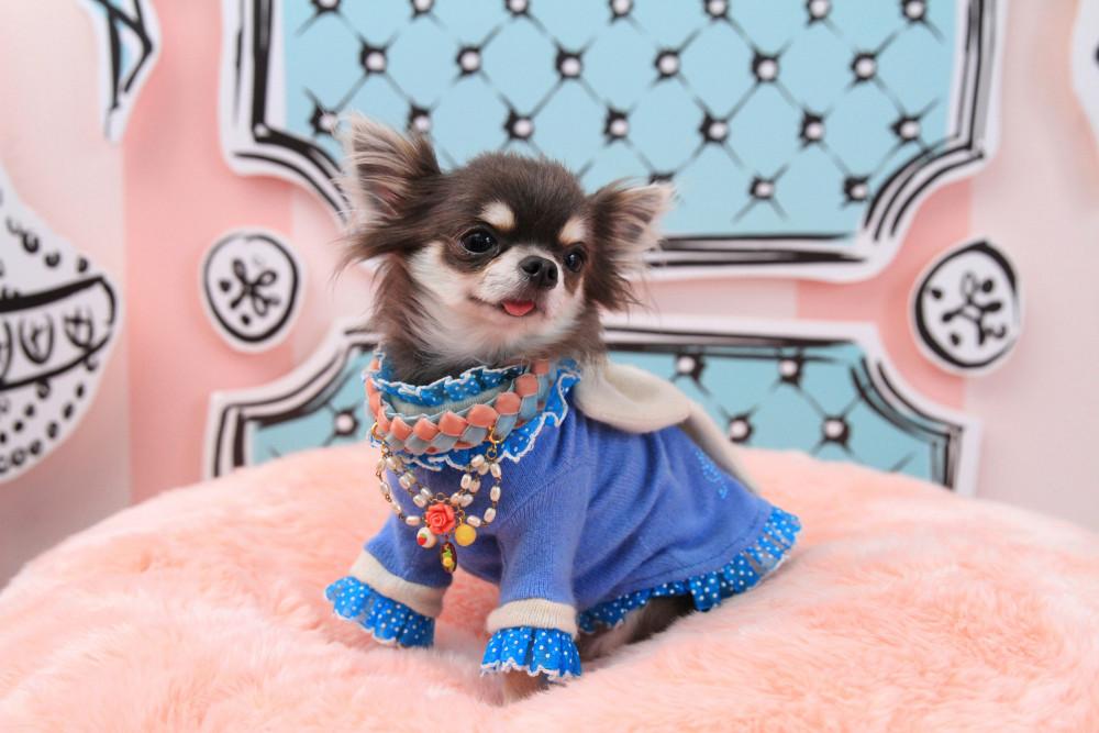 """thế hệ Millennials phát """"cuồng"""" vì những bộ trang phục đáng yêu dành cho chó 14"""