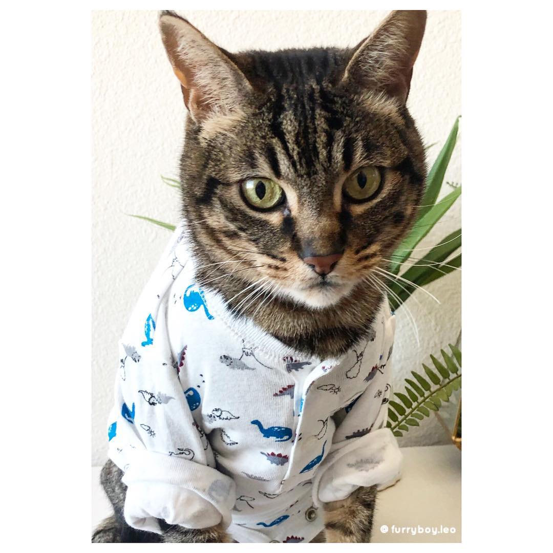 mèo furry boy leo mặc áo pyjama