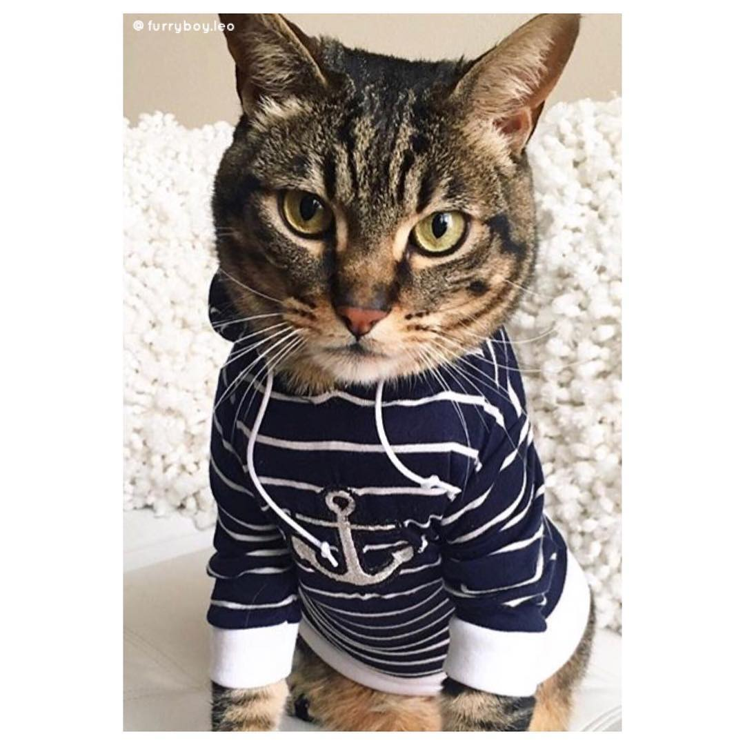 mèo furry boy leo áo len kẻ sọc