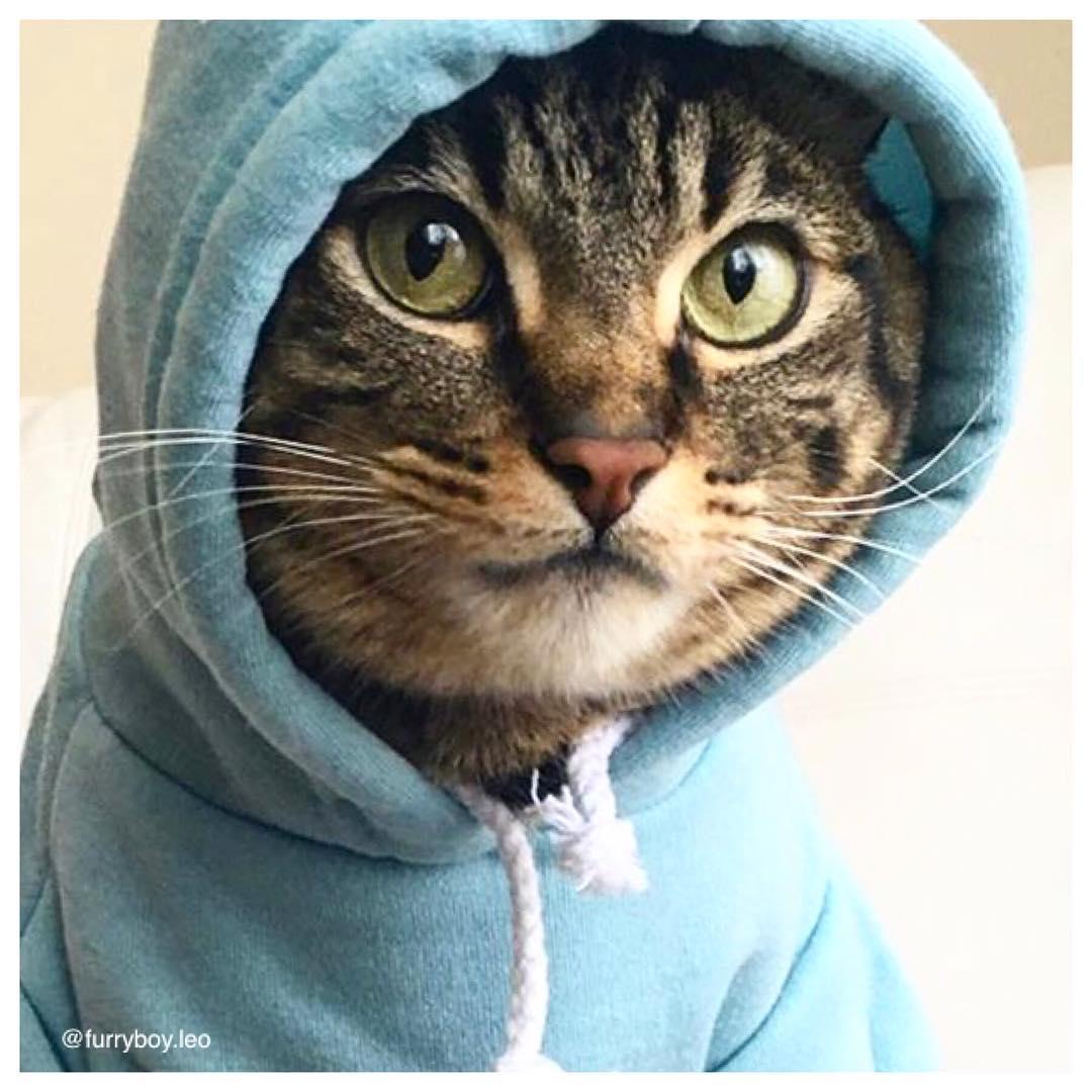 mèo furry boy leo mặc áo hoodie xanh