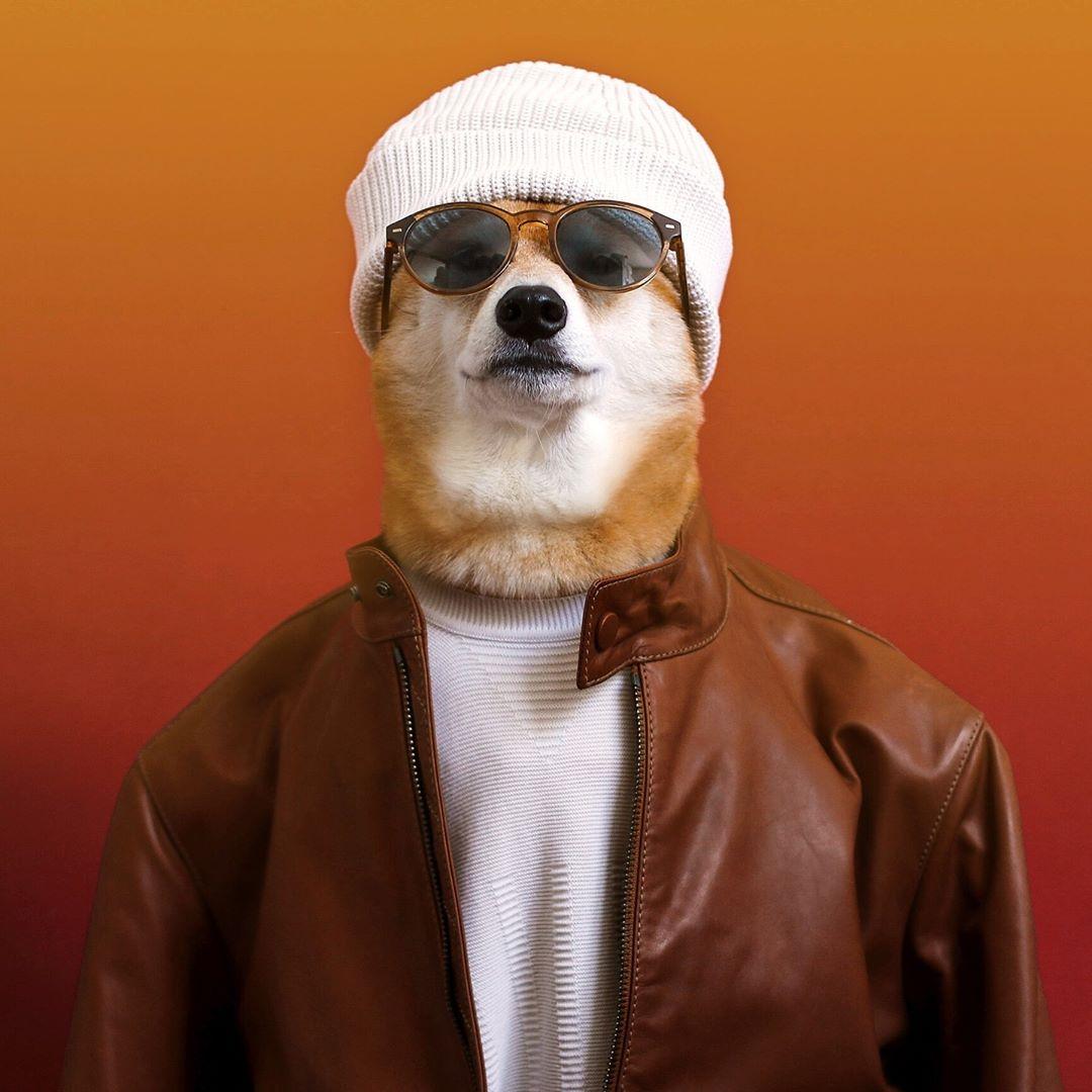 tài khoản instagram của chú chó Bodhi
