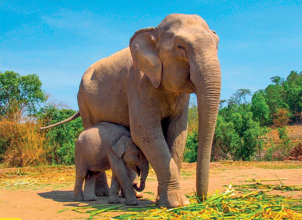 voi mẹ và voi con đang chơi đùa
