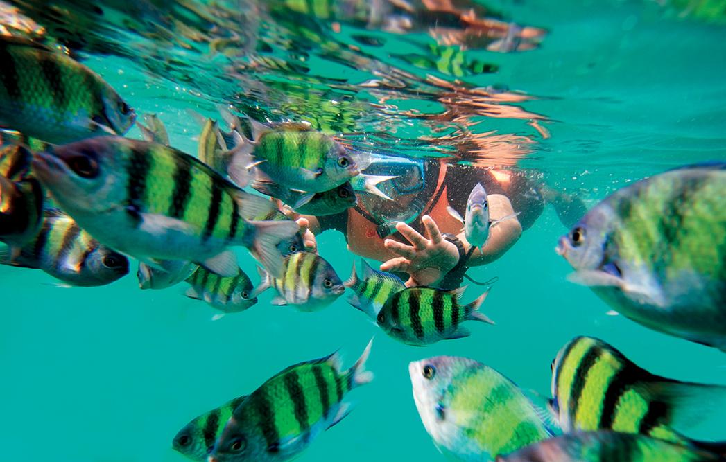 lặn biển cùng bầy cá