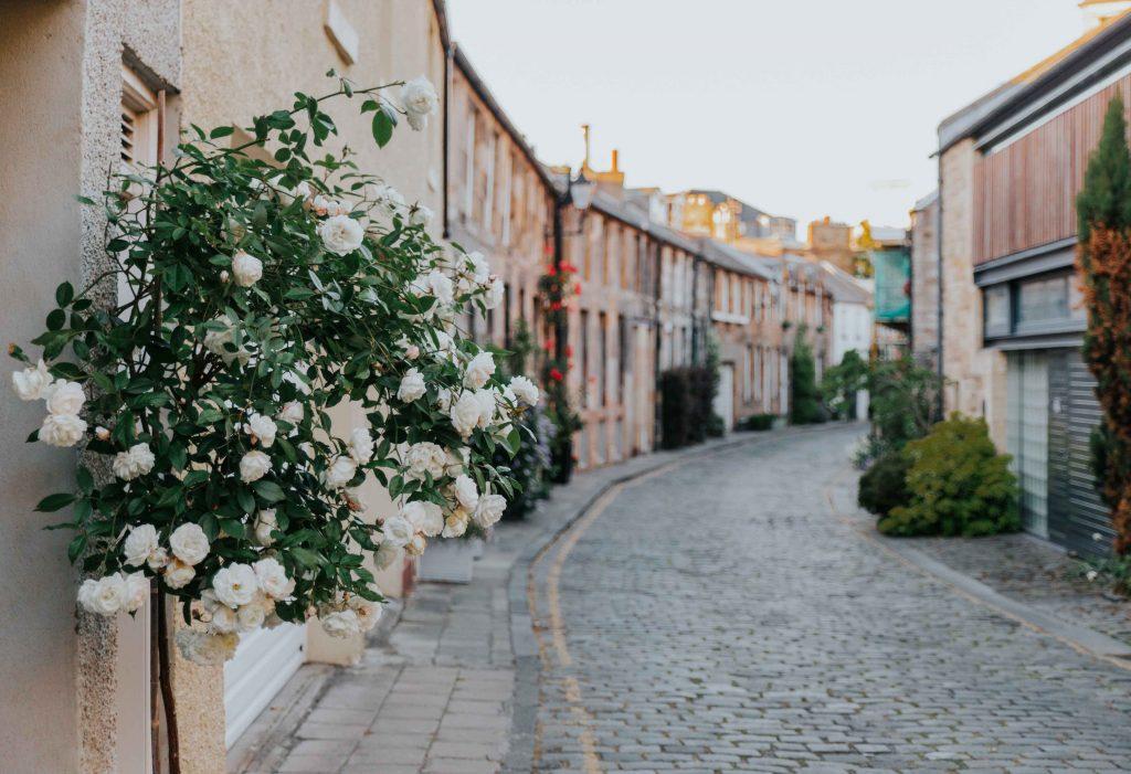 bụi hoa hồng bên phố
