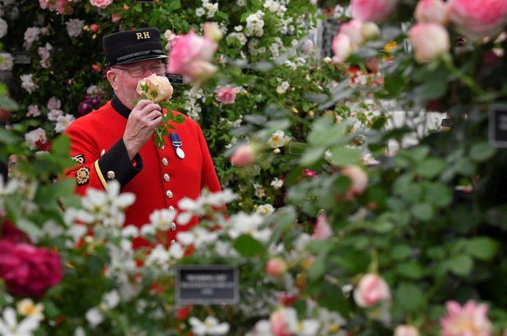 Một cựu binh Chelsea dừng lại thưởng thức hương thơm của hoa hồng