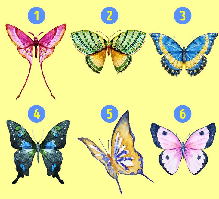 cánh bướm tiết lộ tính cách 01