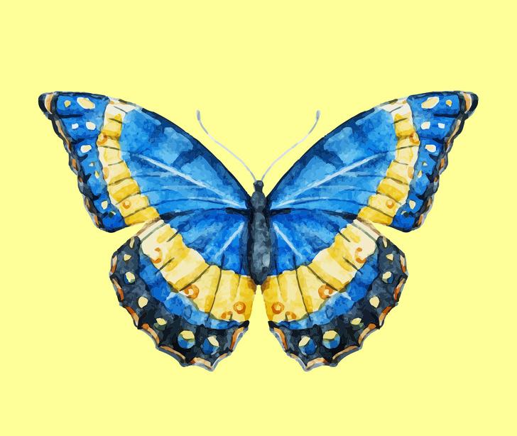 cánh bướm tiết lộ tính cách 04