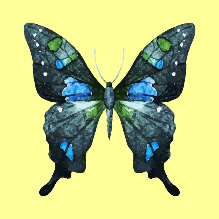 cánh bướm tiết lộ tính cách 05