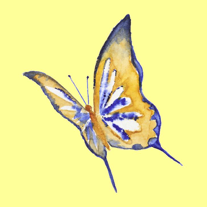 cánh bướm tiết lộ tính cách 06