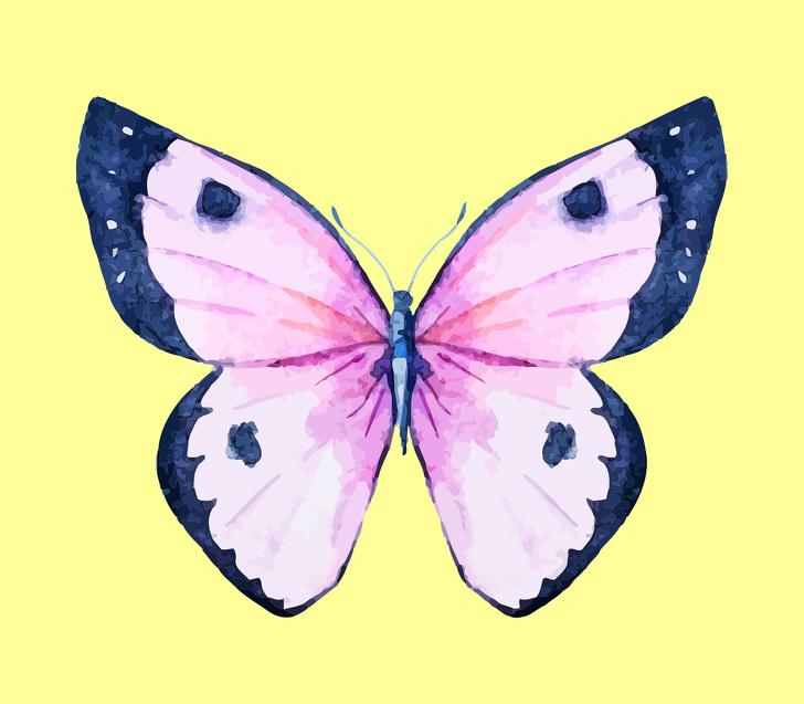 cánh bướm tiết lộ tính cách 07
