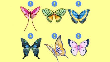 [Trắc nghiệm] Những cánh bướm giải mã đặc điểm tính cách nổi trội của bạn