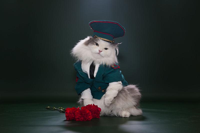 mèo sành điệu nhất Instagram 3
