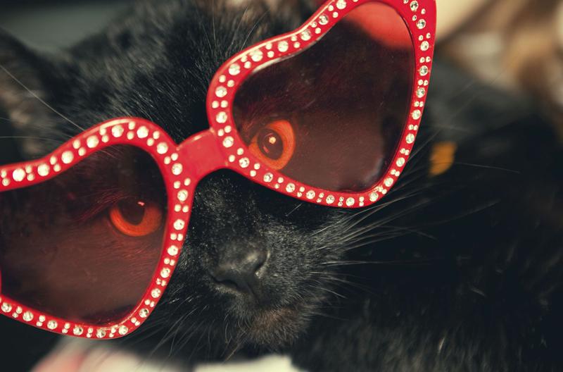 mèo sành điệu nhất Instagram 8