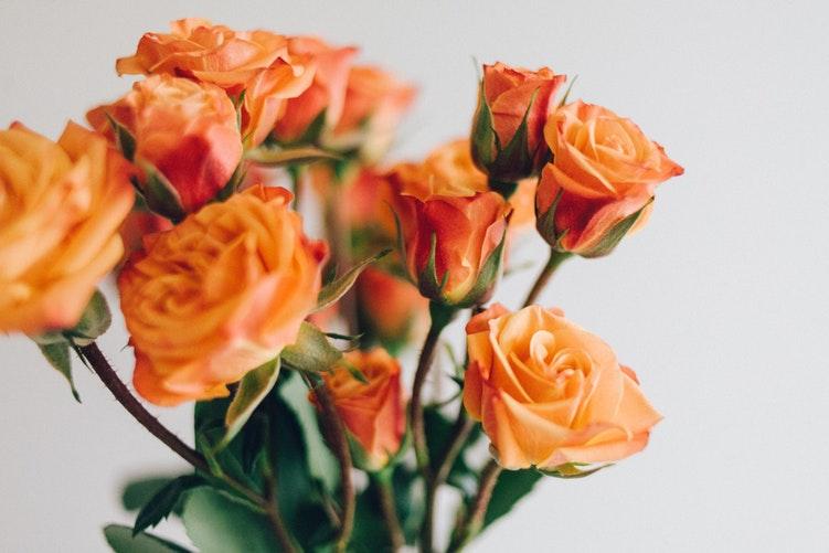 hoa hồng cam