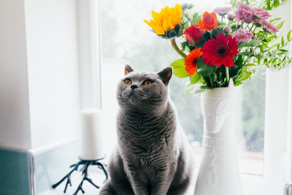 mèo xám ngồi cạnh bình hoa