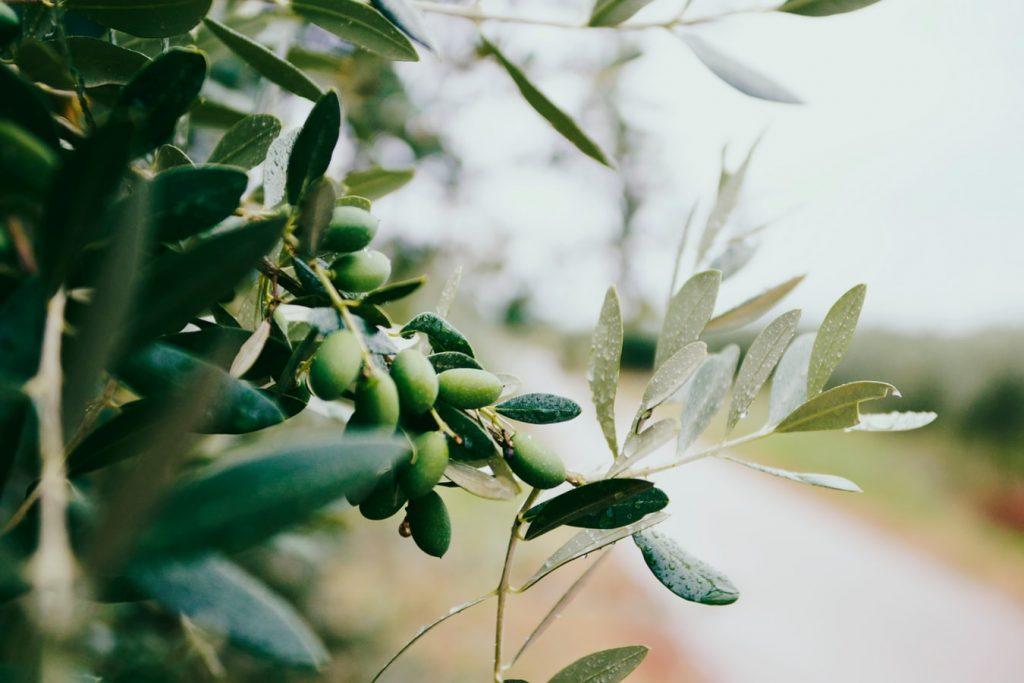 làm đẹp da từ dầu olive