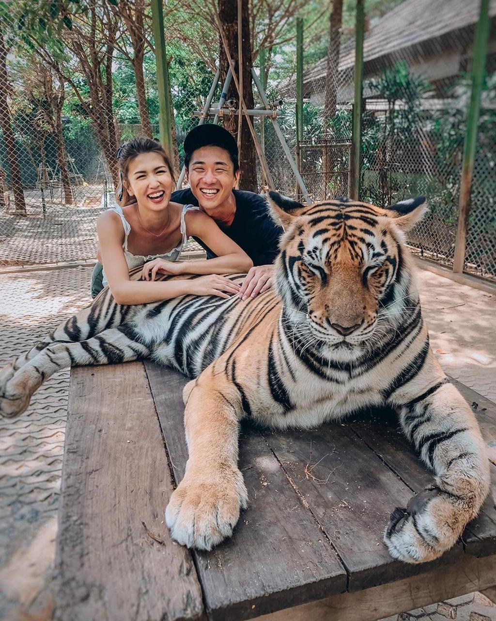 cặp đôi chụp hình với hổ