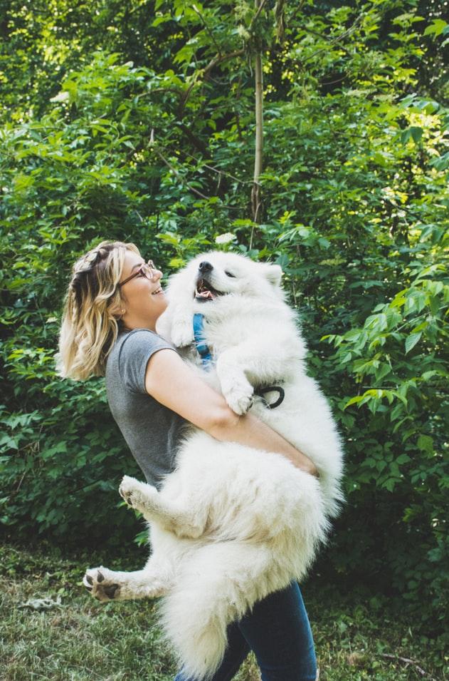 cô gái ôm chó samoyed